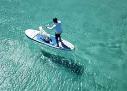 Learn How to Paddle Board with Your Dog in Under a Week
