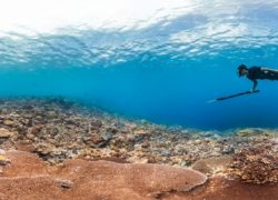Spearfishing from a SUP – Is it Possible?