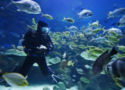 5 Reasons Not to Touch Marine Life